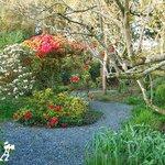 Woodland garden spring 2013