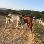 Horses on the Agriturismo... our kids (almost 3 and 5 did a nice walk on them)