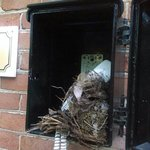 The best!!! Bird nest in room service phone box at the pool!!!!