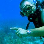 Diving Conch Key