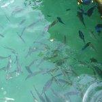 é possível observar peixes em seu habitat natural