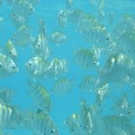 Snorkeling at man-made reef to the south of Playacar (walking distance)