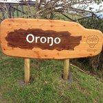Orongo 2