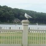 Resident seagull greeting everyone, and hoping for a handout.
