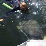 mergulho com peixe-boi