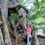 The Roots of the Century Old Trees