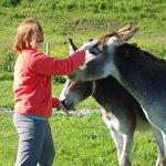 Feeding the donkeys.
