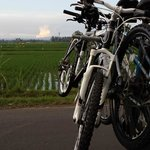 Cycling at sunset in the rice fields