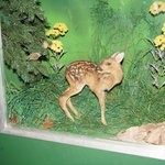 Ausstellung Heimische Tierarten
