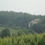 vineyards and king villa
