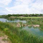 Lago cheio de aves raras