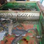 лубителям рыбалки...