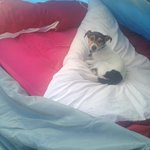 jack having a rest in the tent after a walk up the great orme!