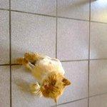 le chat de Damien et Servane