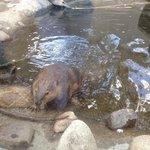 Busy beaver!