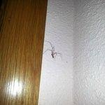 Araña en la puerta de entrada a la habitación