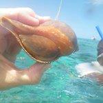 Coquillage trouvé lors du catamaran