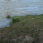 At the River Animas