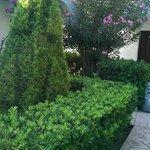 растительность у бунгало