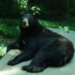 Bear Hollow Zoo