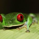 beautful frog