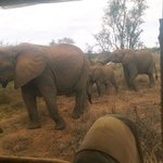 Up close with elephants in the Selenkay Conservancy