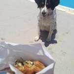 friendly dog want my lunch