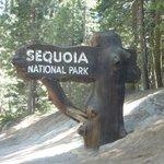 Sequoia Nat'l Park