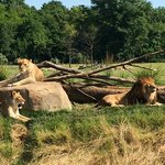 Lounging on the savannah
