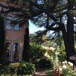 Camellia Inn Foto