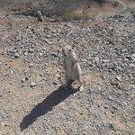 Ecureuils qu'on croise souvent, mignons comme tout !