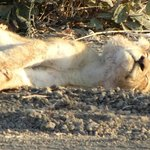Photo de Mchenja Bush Camp - Norman Carr Safaris