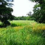Prairie on the farm