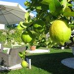 Foto de Villa Aruch