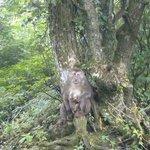 big honkin' mama macaque