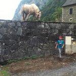 un des quelques chevaux du voisinage