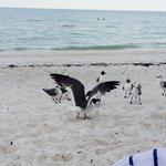 Spiaggia naturale