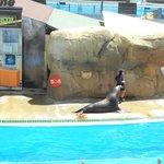 le foche .. spettacolo divertentissimo