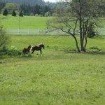Trip in Schwarzwalddorf 4