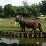 Feeding Rhinos and Zebras from our room