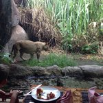 View from the table at the Tsavo Lion restarant