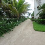 The tropical path to our Cabana