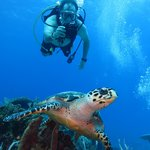 Diving with Pepe in Cozumel