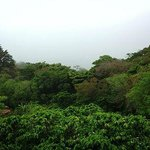 Visit our coffee plantation