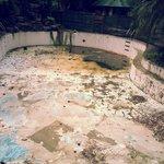Their adverstised pool is dead.