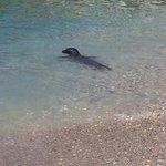 Seal at Gagoy beach