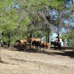Les animaux du Centre Equestre