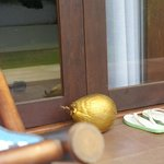 golden coconut (do not disturb sign- quite cool, really!)