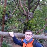 Los koalas a pocos pasos, si sacas el ticket extra los tenes al lado