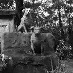 Dog cemetery